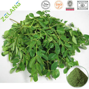 Natural Moringa Leaf Straight Powder pictures & photos