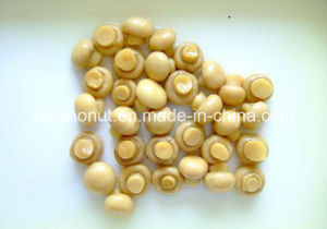 EU Standard Canned Mushroom A10 Size pictures & photos