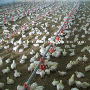 High Quality Automatic Poultry Farming Equipment for Broiler pictures & photos