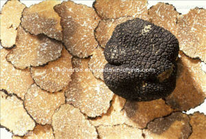 Natural Black Truffle Powder pictures & photos