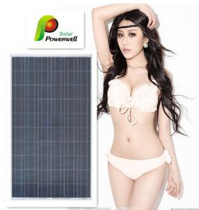 Poly Solar Panel 250W-300W (BWSM300P72)