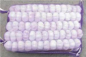Fresh Normal White Jinxiang Garlic