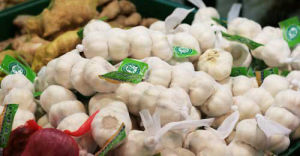 Garlic (13)