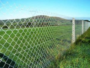 China Supplier Chain Link Fence pictures & photos