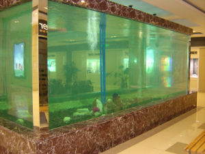 Special Custom Acrylic Fish Tank Display Factory pictures & photos