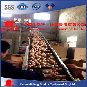 Automatic Layer Poultry Chicken Equipment Eggs Birds Poultry Cage pictures & photos