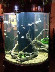 Factory Sells Cheap Acrylic Tank pictures & photos