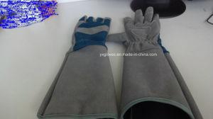 Garden Glove-Gloves-Industrial Glove-Safety Glove-Protective Glove-Machine Glove pictures & photos