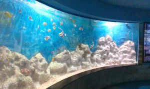 Acrylic Used Marine Fish Tank pictures & photos