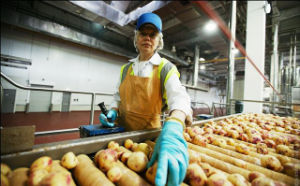 Different Sized Natural Potato-Chips Production Line pictures & photos
