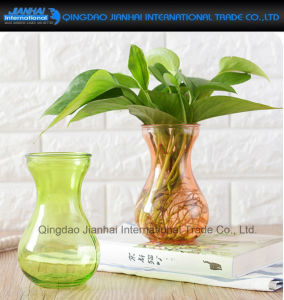 Colored Water Plant Furnishing Articles Glass Craft Floral Vase pictures & photos