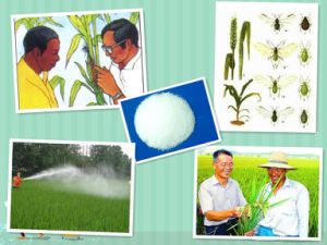 Cotton Vegetable Fruit Insecticidetc 98% Beta Cypermethrin pictures & photos
