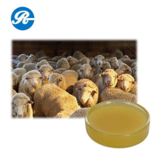 Pharmaceutical Raw Materials Lanolin Anhydrous pictures & photos