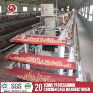 Silver Star Poultry Equipment Chicken Cages for Layer and Broiler pictures & photos