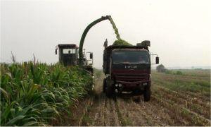9qsz Double Chop Forage Harvester pictures & photos