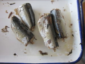 Canned Mackerel China Supplier Hot Sales