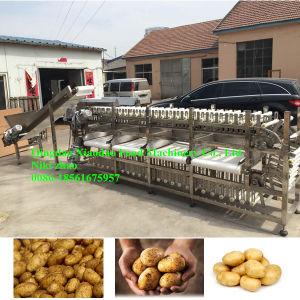 Automatic Potato Sorting Machine/Grading Machine pictures & photos