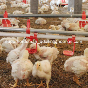 Full Set High Quality Automatic Poultry Feeder for Broiler pictures & photos
