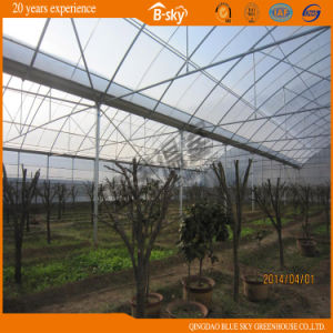 Arch Structure Multi-Span Film Green House for Planting pictures & photos