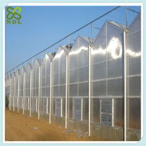 Venlo Hydroponic Systems Tomato Green House pictures & photos