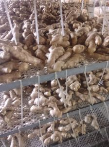Full Air Dried Ginger 250g with European Standard pictures & photos