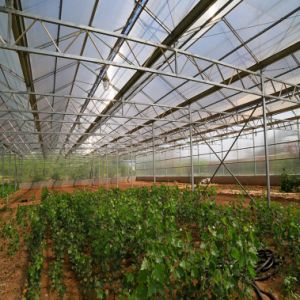 Crystal Polycarbonate Roofing Sheets for One Stop Gardens Greenhouse Sale pictures & photos