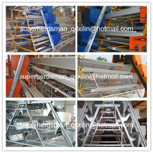 High Quality Automatic Chicken Cage Poultry Equipment for Layers pictures & photos