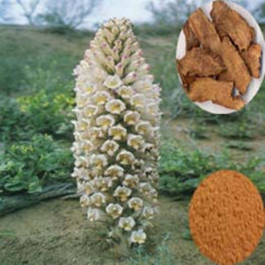 Male Health: Cistanche Tubulosa Extract (FH-C-070) pictures & photos