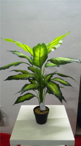 High Quality of Artificial Plants Dieffenbachia with 24lvs Gu911093912 pictures & photos