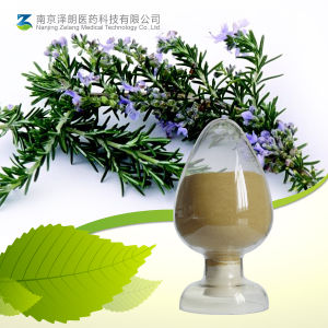 Rosemary Extract / Carnosic Acid / Food Additives (CAS3650-09-7) pictures & photos