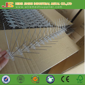 Bird Spike Pest Control Type and Birds Pest Type Bird Spikes pictures & photos