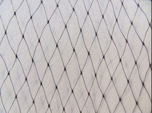 PP Anti Bird Netting Plastic Knitted Net Stretch Net pictures & photos