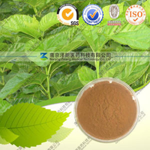 Factory Direct Supply Natuarl Mulberry Leaf Extract pictures & photos