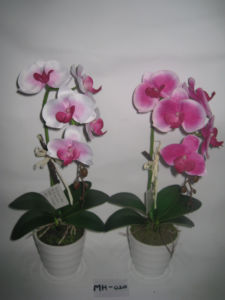2012 Hot Artificial Plastic Potted Orchids with Two Stems (MH-020)