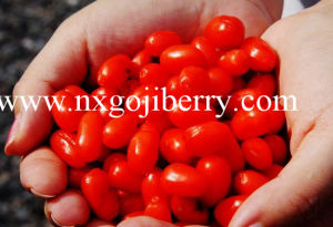 Dried Goji Berry/Wolfberry/Medlar/Lycium Barbarum pictures & photos