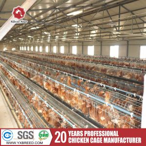Automatic Chicken Egg Collecter pictures & photos