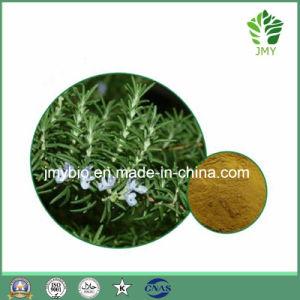 Antioxidant Rosemary Extract, Rosmarinic Acid 98%, Carnosic Acid 80% pictures & photos