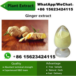 China Factory Natural Ginger Extract Powder Ginger Plant pictures & photos