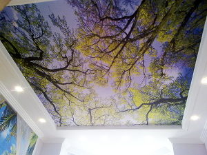 Custom Landscape PVC Ceilings Stretch Film for Decoration pictures & photos