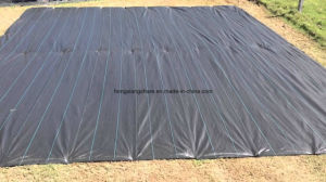 Ground Cover Weed Mat with UV pictures & photos