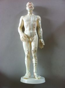 50cm Acupuncture Model: Whole Body pictures & photos