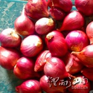 Fresh New Crop Shallot for Exporting pictures & photos