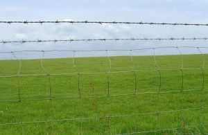 Highway Protect Fence pictures & photos