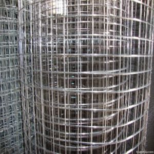 Electro Hot Galvanized Welded Wire Mesh pictures & photos