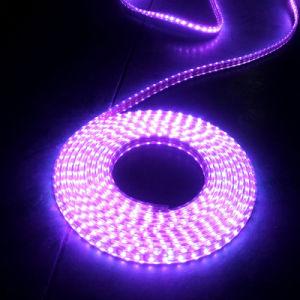 30LEDs Pink Light SMD5050 Waterproof LED Strip (G-SMD5050-30-12V-1012) pictures & photos