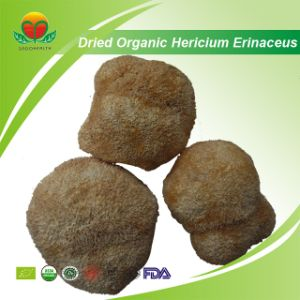 Manufacturer Supplier Dried Organic Hericium Erinaceus pictures & photos