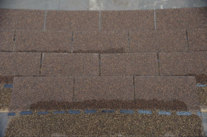 Single Layer of Roofing Tile