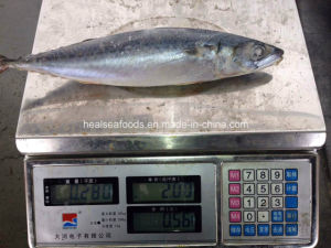 Best-Selling High Quality Canned Mackerel pictures & photos