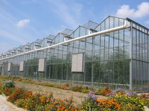 Galvanized Steel Structure Glass Greenhouse/ Commercial Greenhouse pictures & photos