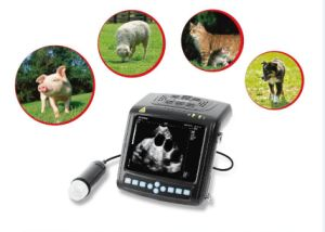 Best Prices Veterinary Ultrasound Scanner